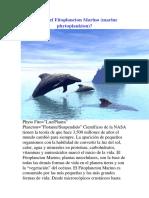 ¿Qué Es El Fitoplancton Marino