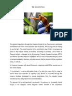 Animal en Extincion en Panama en Ingles