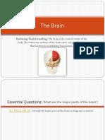The Brain Power Point.pdf