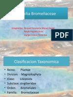 Familia Bromeliaceae (presentacion)