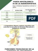 HIPOTALAMO FUNCIONES