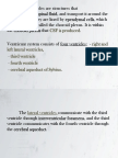Neuroanatomia part 2.pdf