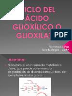 CICLO DEL ÁCIDO GLIOXÍLICO O GLIOXILATO Fiamma La Paz (1).pptx