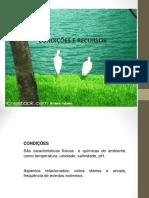 8_condições e Recursos.ppt