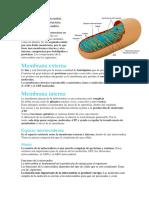 Estructura de La Mitocondria