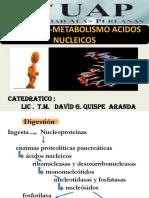 Clase Digestion y Metabolismo de Acidos Nucleicos