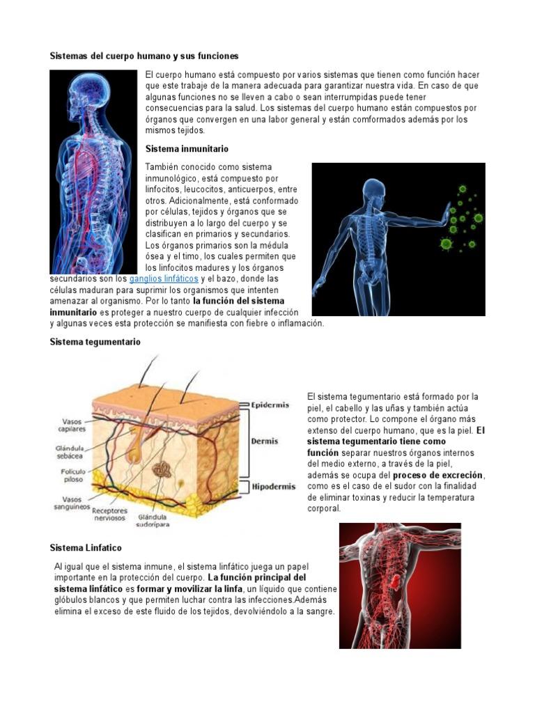 Sistemas Del Cuerpo Humano y Sus Funciones