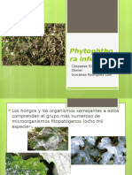 Phytophthora-infestans