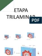 ETAPA TRILAMINAR.ppt