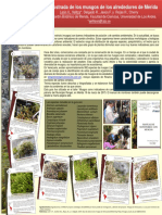 Guia de Musgos de Los Alrededores de Mérida_poster