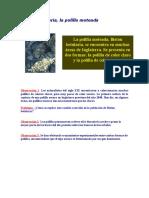 40852_178539_Guía 3