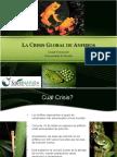 Anfibios-la Crisis Global de Anfibios
