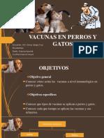 Vacunas de Perros y Gatos (1)
