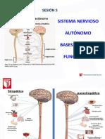 Clase 5 - Sistema Nervioso Autónomo-2016-II