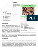 Saccharum_officinarum.pdf