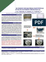 SOLUBILIZAÇÃO DE FOSFATO POR BACTÉRIAS DIAZOTRÓFICAS ISOLADAS DE SOLOS CULTIVADOS COM Brachiaria sp.