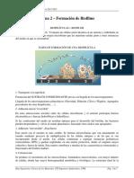 Formacion y Desarrollo de Biopeliculas