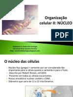 Aula Organização Celular II - Organização Celular II - Núcleo