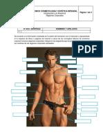 Taller Regiones Corporales Anatomía (1).Docx Sin Resolver
