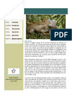 Iguana.pdf