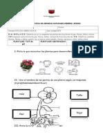 PRUEBA SUMATIVA CIENCIASlas plantas.docx