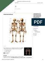 Biodescodificación_ Sistema Osteo-Articular