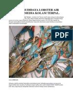 Cara Budidaya Lobster Air Tawar Media Kolam Terpal.