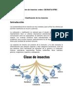 Clasificación de Los Insectos