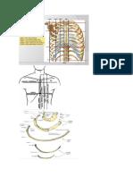 Cuadrantes del abdomen