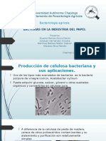 Bacterias en Papel