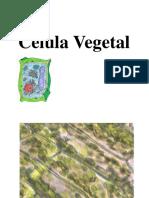 486597302.9 Célula Vegetal