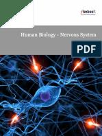 Human Biology Nervous System