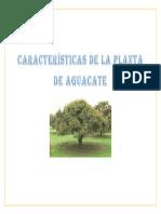 Características de La Planta de Aguacate