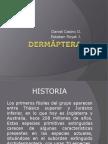 Orden Dermáptera