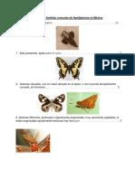 Clave Para Familias Comunes de Lepidóptera