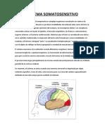 Trabajo de Investigación Sobre Sistema Somatosensorial