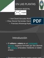 ETILENO EN LAS PLANTAS.ppt