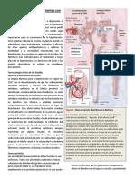 Lectura-2-semana-2.pdf