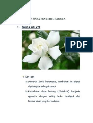 87 Gambar Bunga Dan Cara Penyerbukannya Terlihat Keren Gambar Pixabay