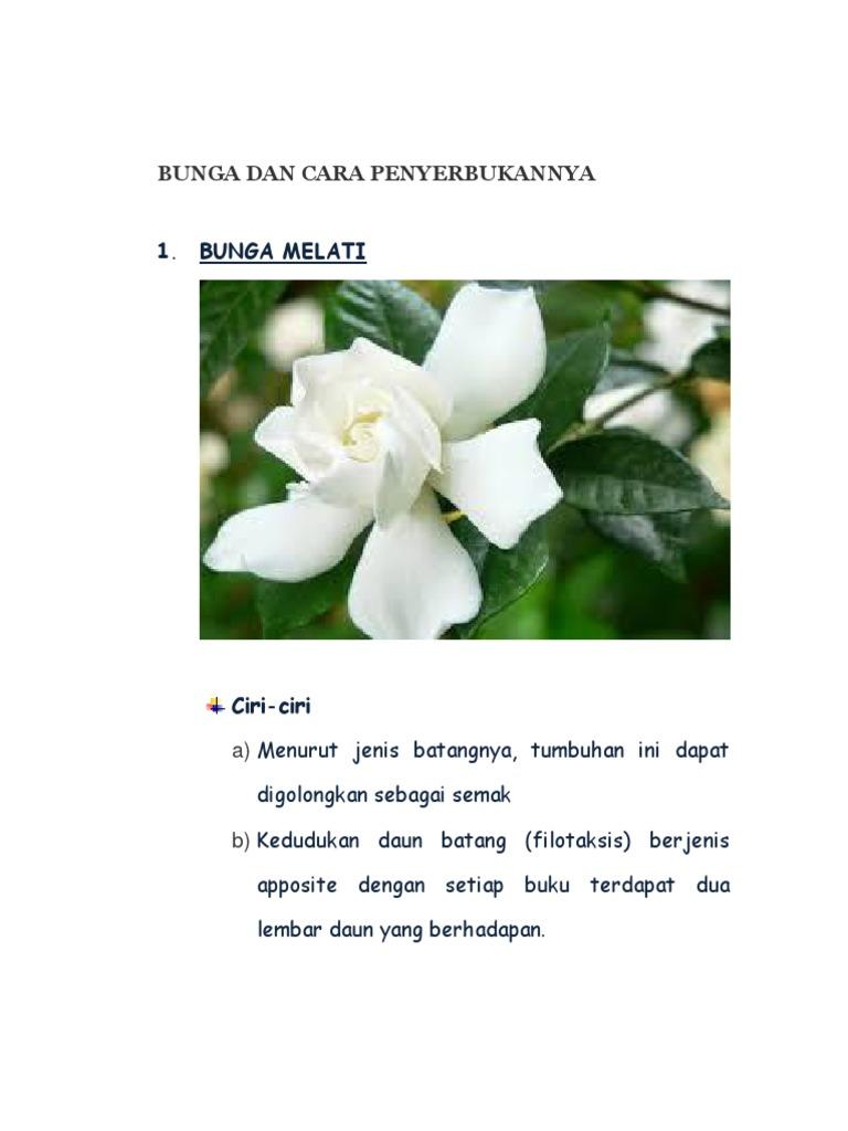 Gambar Cara Penyerbukan Bunga Mawar Gambar Bunga Mawar