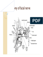Anatomy of facial nerve new.pdf