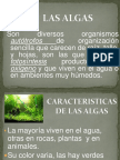 Exposicin Las Algas 1289661829 Phpapp01