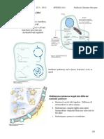Cellular Metabolism - CHM333