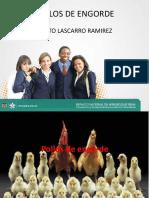 Pecuario Sena Pollitos_ Proyecto Productivo Pollos de Engorde