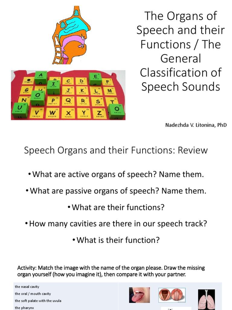 Speech organs pdf speech consonant ccuart Gallery