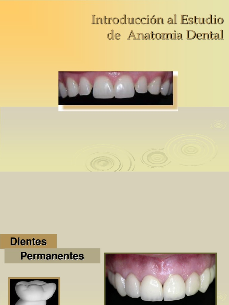 Anatomia Dental...Parcial