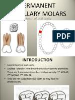Maxillary Molars- Padminee