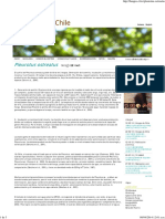 Pleurotus Ostreatus _ Hongos de Chile
