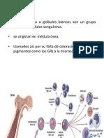 03. Hematofisiologia Clase 3 Leucocitos Aemh