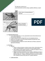 42.Psychodidae